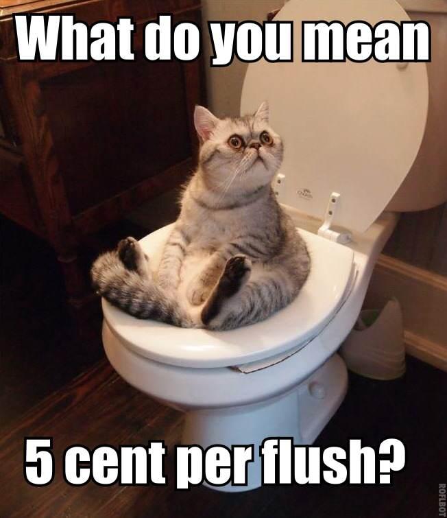 Do toalety tylko w pracy – Irlandczycy oszczędzają wodę