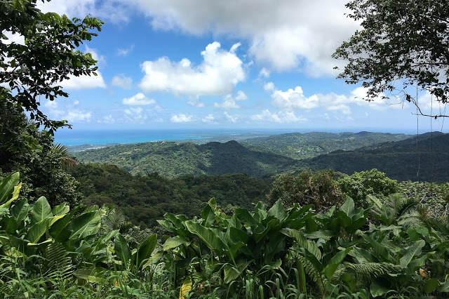 Karaiby? Coqui w El Yunque…