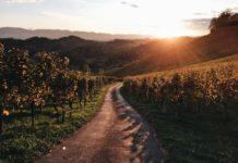 Najpiękniejsze miejsce do zobaczenia jesienią w Austrii - Südsteirische Weinstraße