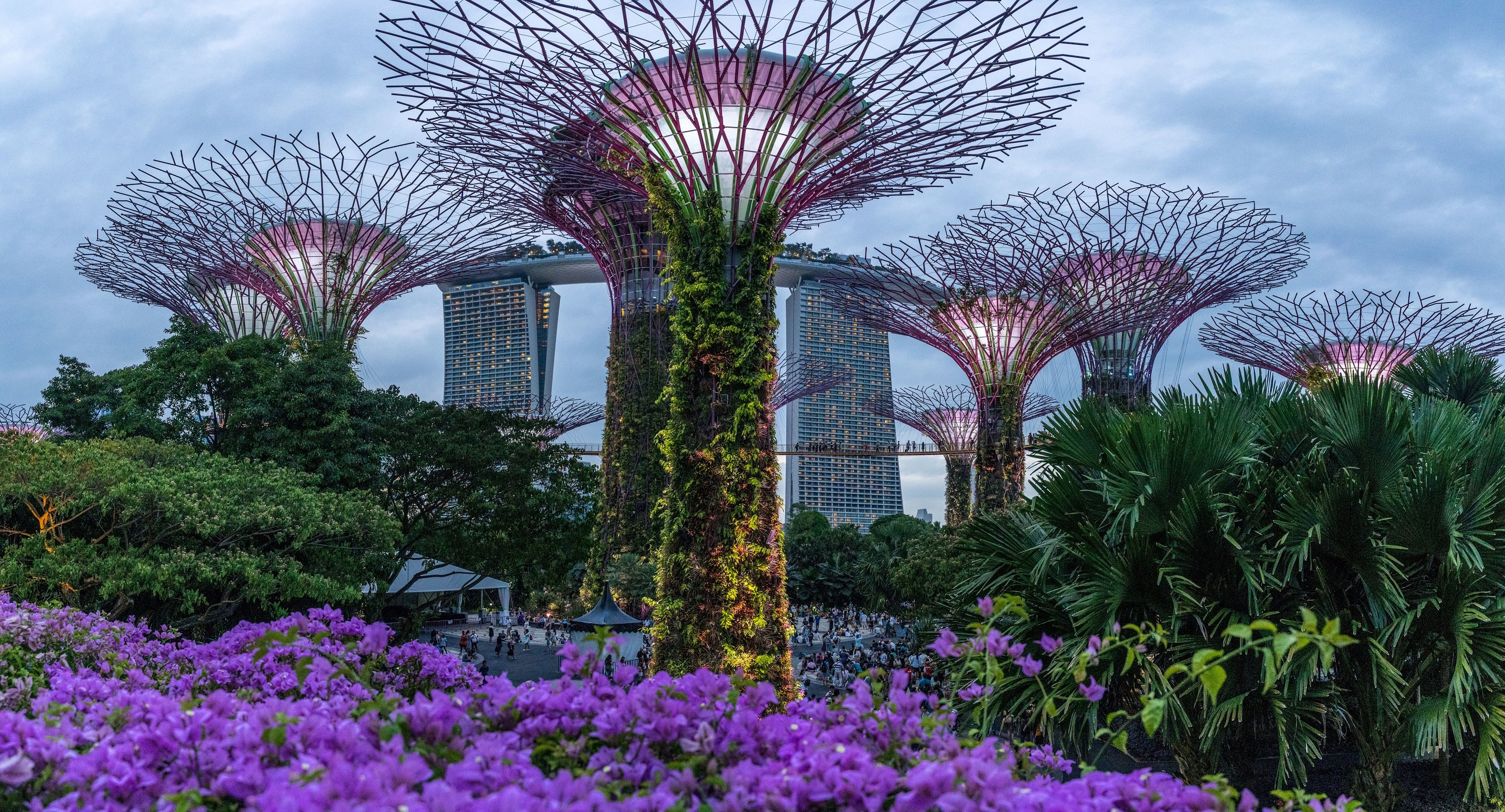 Singapore January 2016: Blue Hour View Of Super Tree Grove At Gardens By The Bay. Spanning 101 Hectares Of Reclaimed Land In Central Singapore, Adjacent To The Marina Reservoir