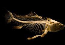 Uwaga Na Toksyczne Ryby