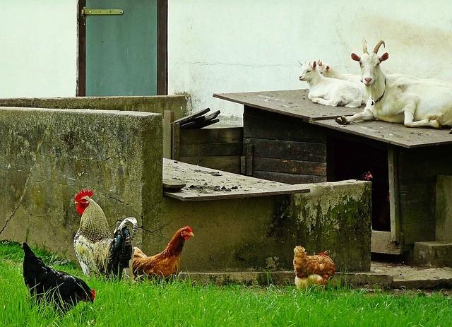 nasze wyobrażenia o życiu zwierząt w gospodarstwie rolnym